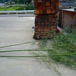 山から竹を切って来て